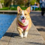 Comment gérez-vous la perte de votre chien?